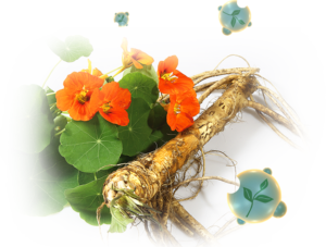 horseradish and nasturtim for sinusitis and urinary tract infections