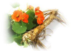 natural remedies fro sinusitis