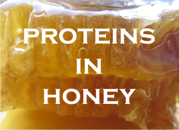Proteinsinhoneyg what are the proteins in honey fandeluxe Images