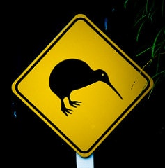 kiwi bird from NZ