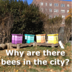keeping bees in the city