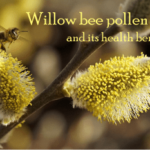 what is willow bee pollen good for