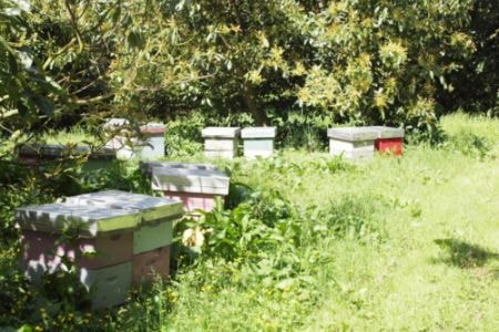 bee hives in an avocado orchard
