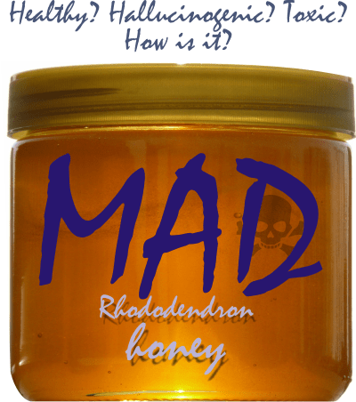 what is mad honey and where to find it