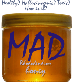 what is mad honey
