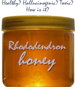 hallucinogenic or toxic honey?