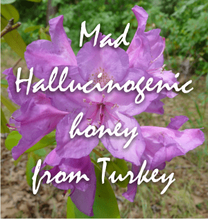 rhododendron ponticum flowers give us the hallucinogenic mad honey