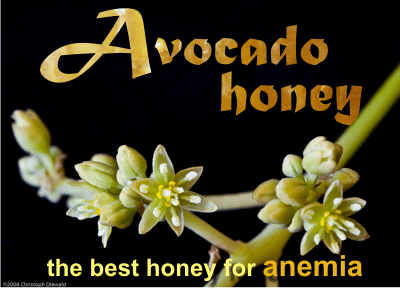 avocado honey health benefits