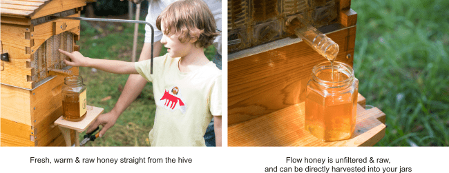 raw organic honey for children