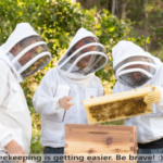 start beekeeping today It is easy