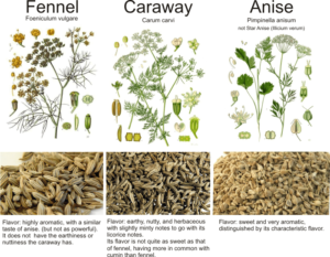 A COMPARISON BETWEEN CARAWAY FENNEL AND ANISE