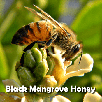 black mangrove honey is becoming rare