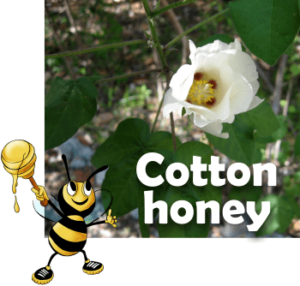 what is cotton honey like