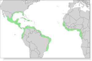 where can i find black mangrove honey