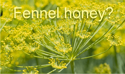 is fennel honey real