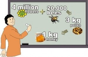 what is honey and how it is made