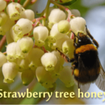 the healthiest honey in the world: strawberry tree honey