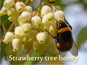 the healthiest honey in the world: strawberry tree honey