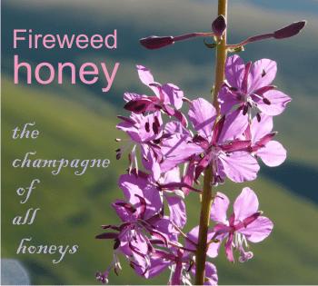 fireweed honey characteristics