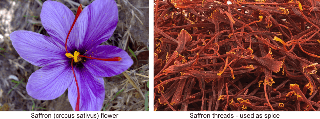 saffron honey stimulates sex