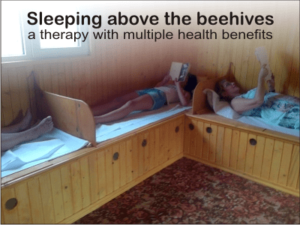 bee therapy house