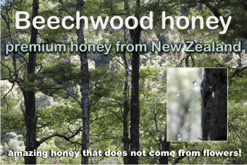 what is beechwood honey
