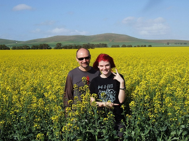 bees can easily sting you in a canola field