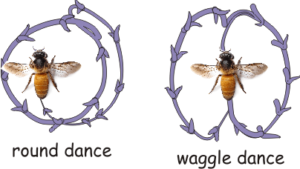 bees create electric field while doing the dance