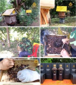 how kelulut honey is made