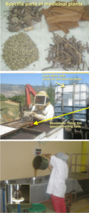 how is honey made at zuf globus