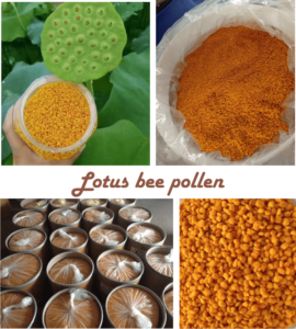 what is lotus bee pollen good for