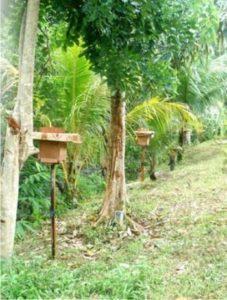 how is trigona honey made