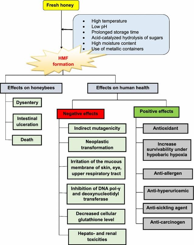 efeitos do HMF na saúde humana &quot;width =&quot; 638 &quot;height =&quot; 806 &quot;/&gt;</p><p>Em conclusão, como um constituinte de alimentos processados, o HMF tem efeitos profundamente adversos e benéficos em humanos. Alguns efeitos do HMF na saúde humana e suas propriedades carcinogênicas e anticancerígenas permanecem inconclusivos, com muitos estudos realizados apenas em níveis pré-clínicos.</p><p>Foi relatado que os seres humanos podem ingerir entre 30 e 150 mg de HMF diariamente por meio de vários produtos alimentícios; no entanto, níveis seguros de consumo de HMF não estão bem esclarecidos.</p><p style=