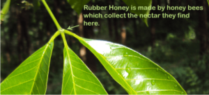 what is rubber honey