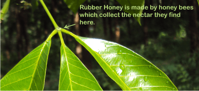 What Is Rubber Made Of >> What Is Rubber Honey Discover The Benefits Of Honey