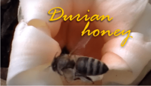 is durian honey smelly