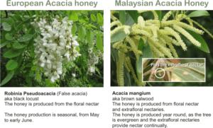 acacia mangium honey vs acacia honey