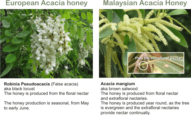 acacia mangium honey vs acacia honey
