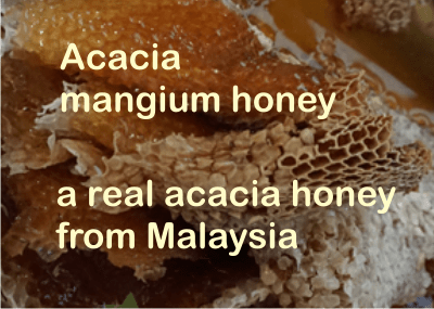 what is acacia mangium honey