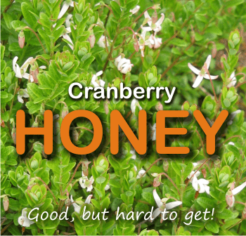 cranberry honey is good for UTI