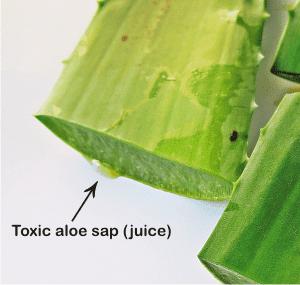 what is the toxic juice of aloe vera