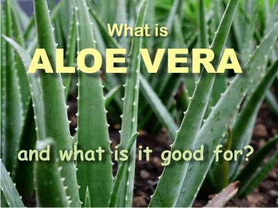 what are aloe vera health benefits