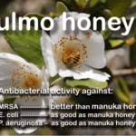 fresh ulmo honey from Chile kills MRSA better than manuka honey UMF25+
