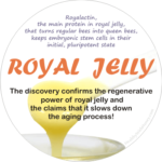 what makes me young? see the health benefits of royal jelly