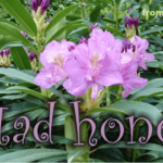 mad honey aka rhododendron honey aka deli bal