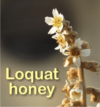 what is loquat honey good for