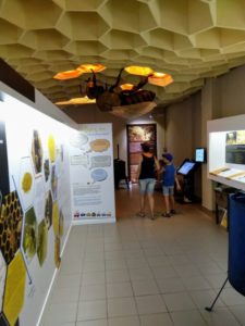 bee museum from inside