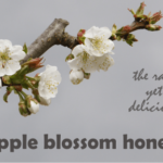 apple honey aka apple blossom honey