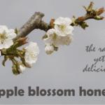 apple honey aka apple blossom honey
