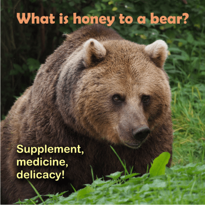 bears like honey and have preferences on its quality